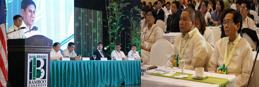 Bamboo can help increase PH's forest cover